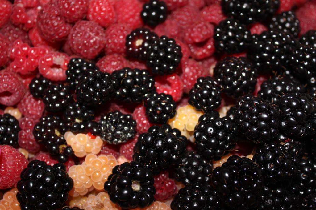 mele e frutti-milano-torino 045